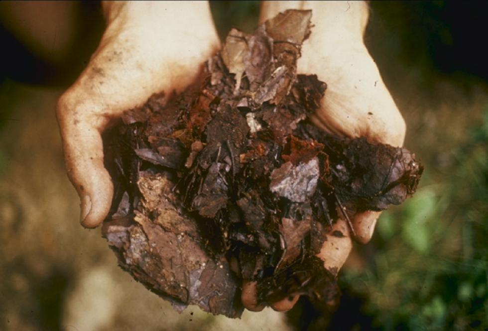 Talk Dirt: What's Creeping in  Your Compost