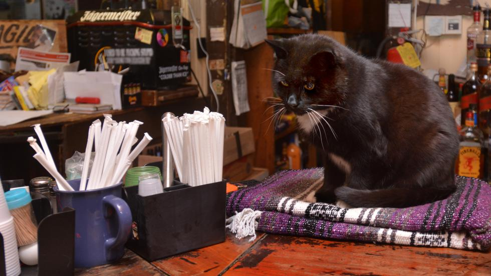 JERREY ROBERTS Bo is the resident cat at the Hot L in South Deerfield. - JERREY ROBERTS   DAILY HAMPSHIRE GAZETTE