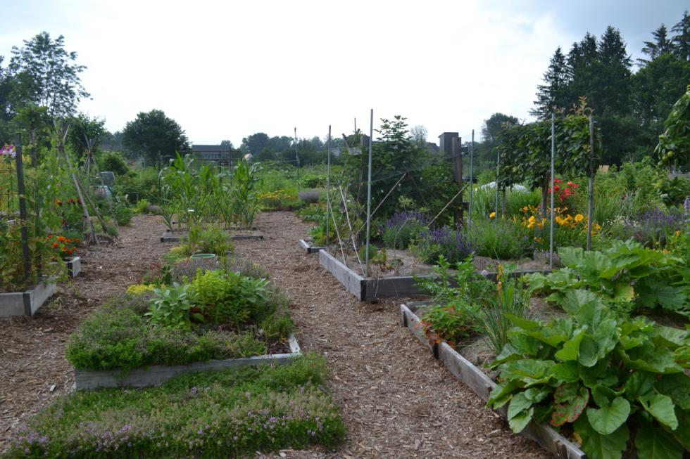Pay It Forward With Produce: Where to donate your extra garden greens