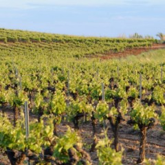 The Pour Man: Crystal Clear, Green Highlights, Picpoul de Pinet