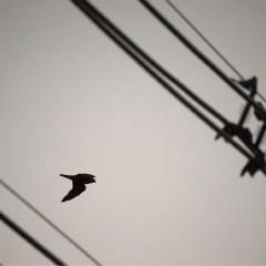 Scene Here: Bird Brain