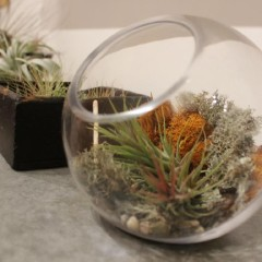 How to  Terrarium: turning houseplants into tiny works of art