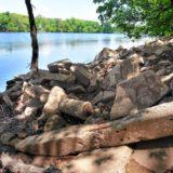 Between the Lines: A Rebar River Runs Through It