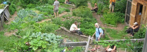 4,500 Square-Feet of Eden Blooms in Holyoke: A mega farm on a mini lawn