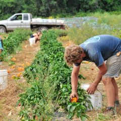 Down to Earth: Sustainable Farming 101, Five College farms face challenges teaching the next generation about food