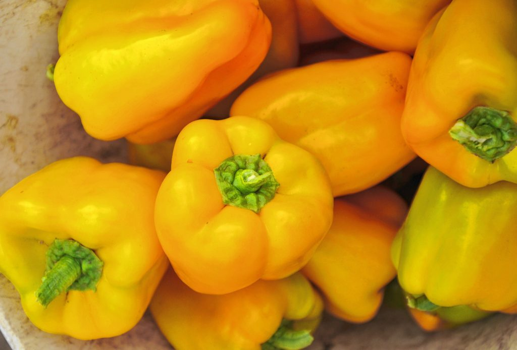 Peppers picked at  Book and plow Farm in Amherst.