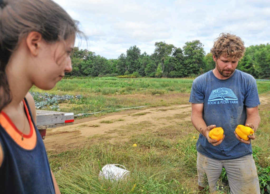 Tobin Porter-Brown, founder and owner of Book and Plow Farm in Amherst,  explains which peppers are ready to pick to Annabelle,  an Amherst College student.