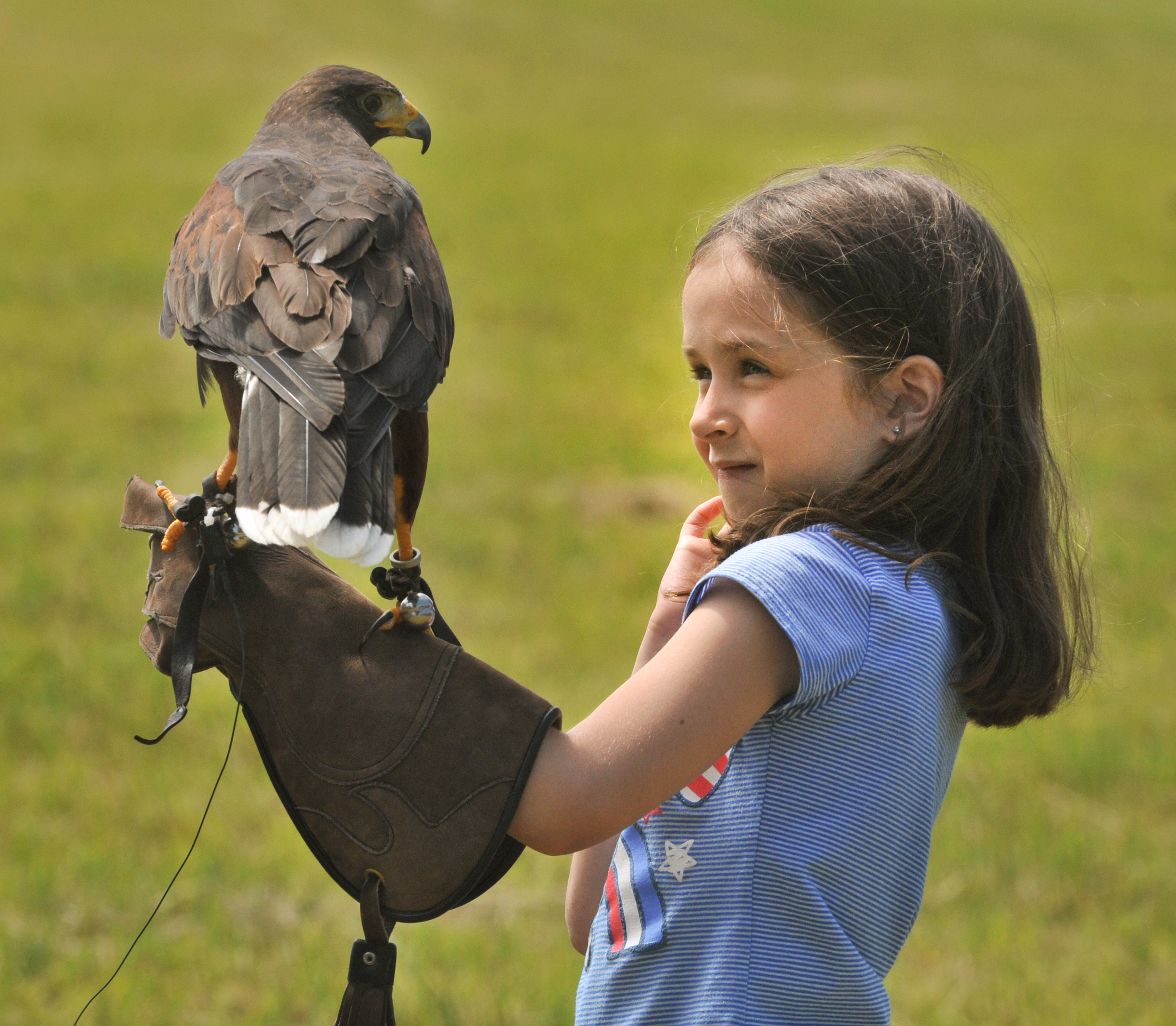 Learning Falconry with Chris Davis