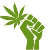 O, Cannabis: Worried About Weed? Then Legalize It