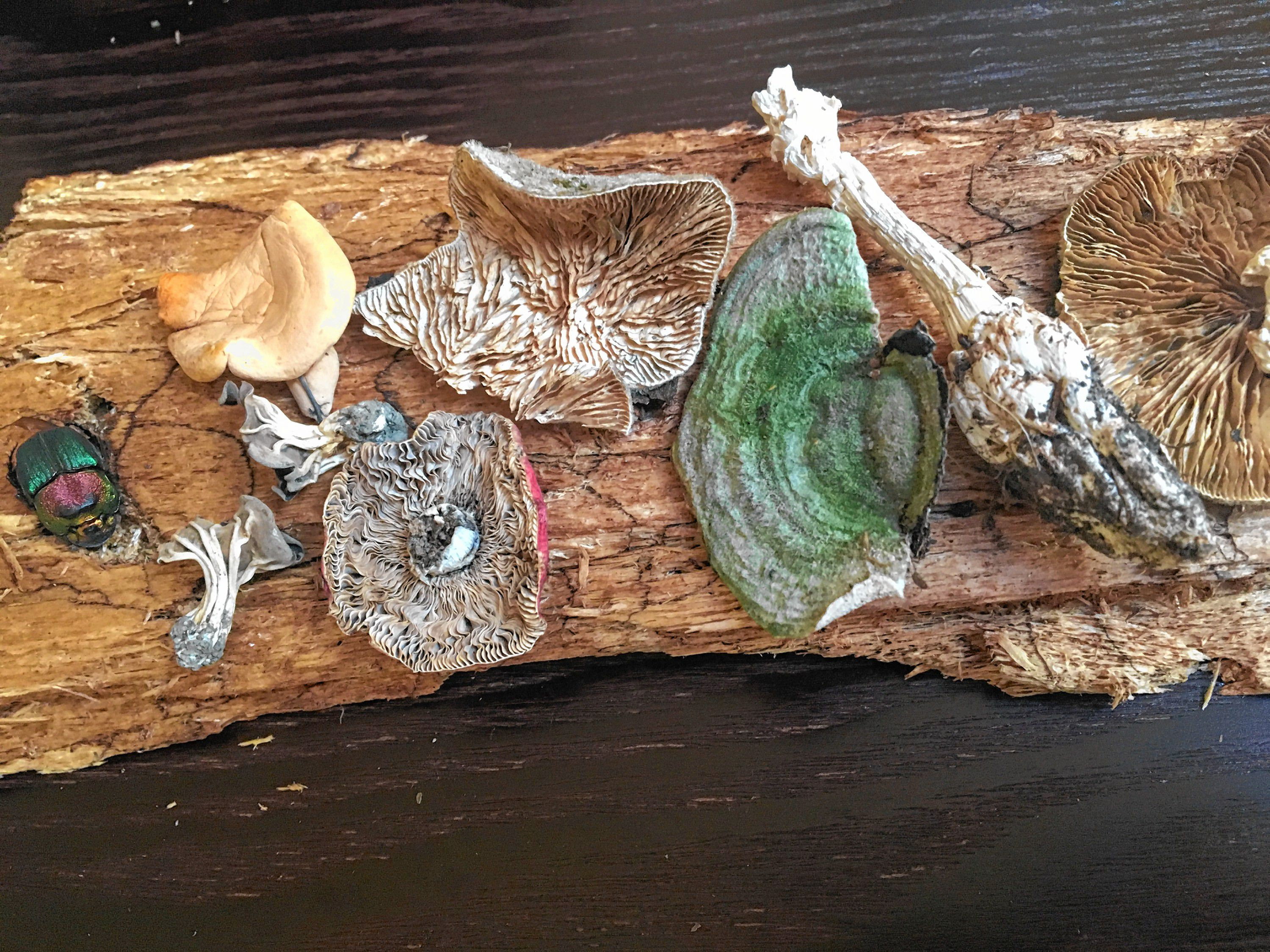 Nerding Out: Fungus Passion