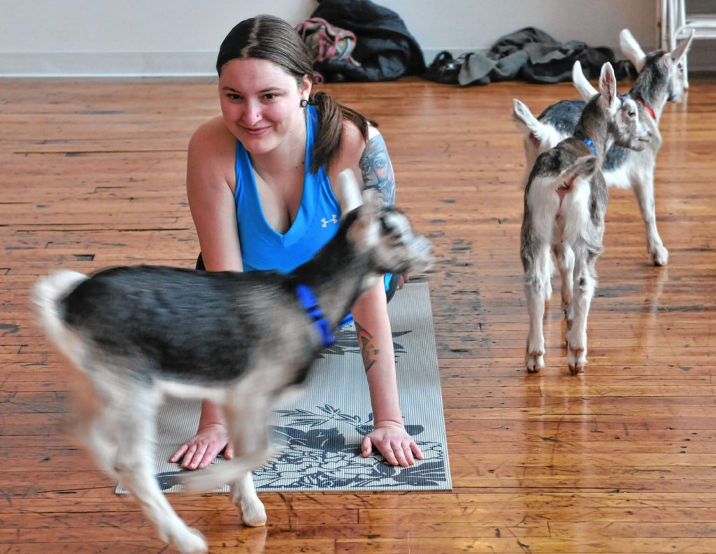 Lauren Mudway during Goat Yoga in Easthampton Friday afternoon.