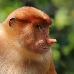 Bizarro Briefs: If a Monkey Takes a Selfie, Is It Yours?
