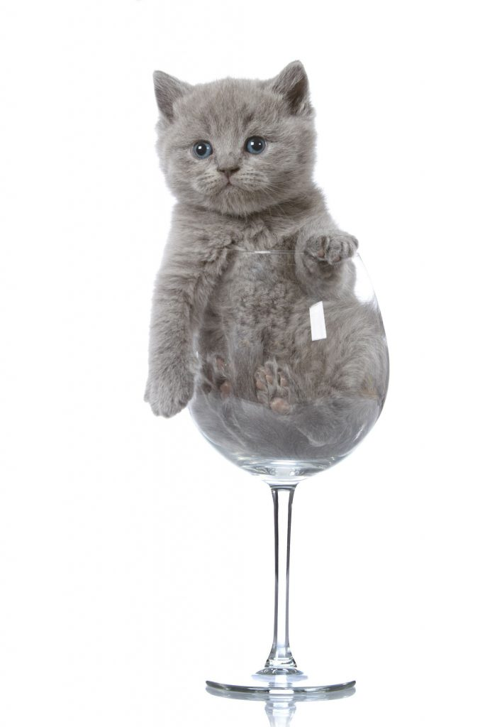kitten in a wine glass