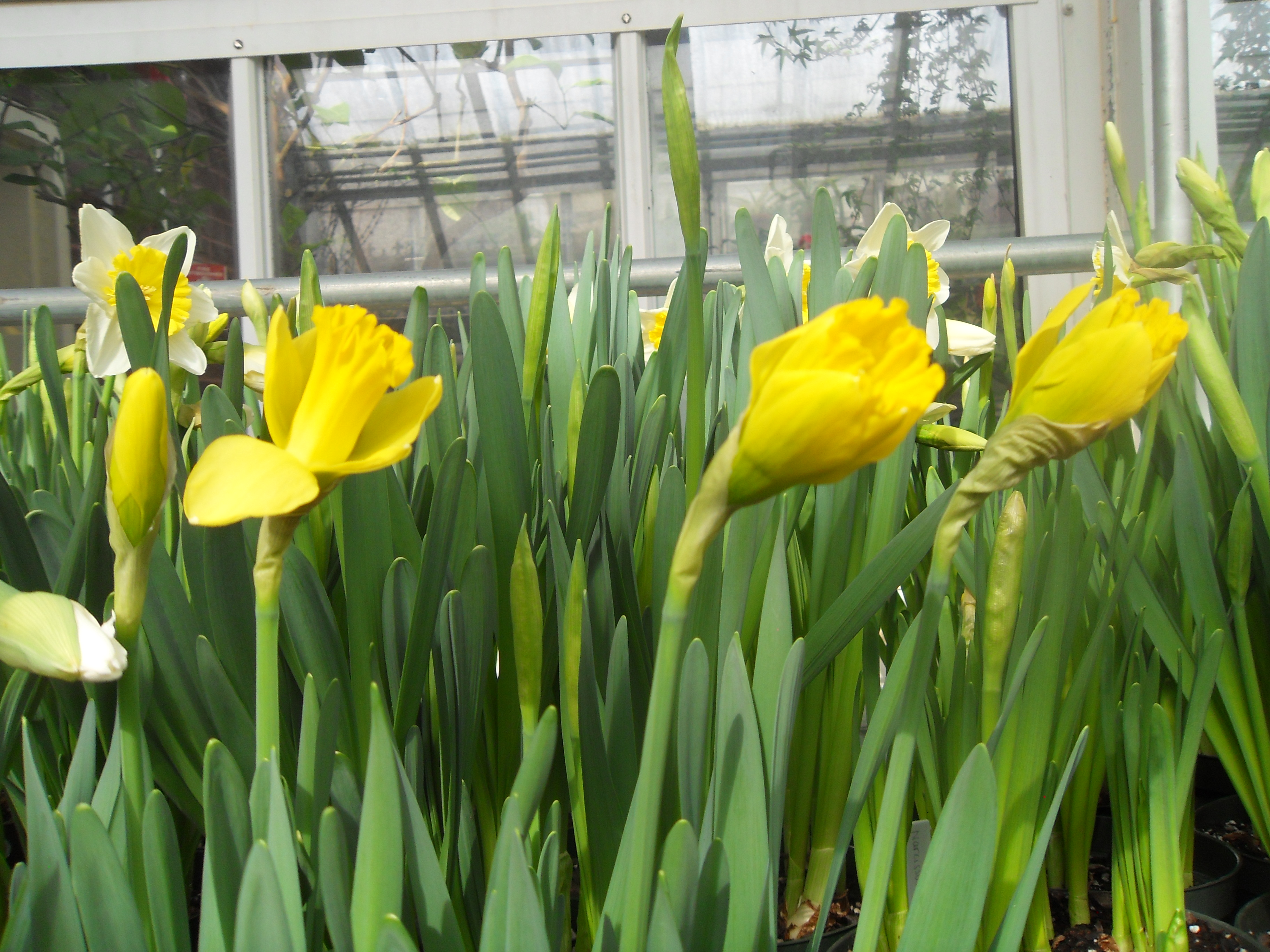 Coming Soon Fields Of Flowers At The Smith College Bulb Show