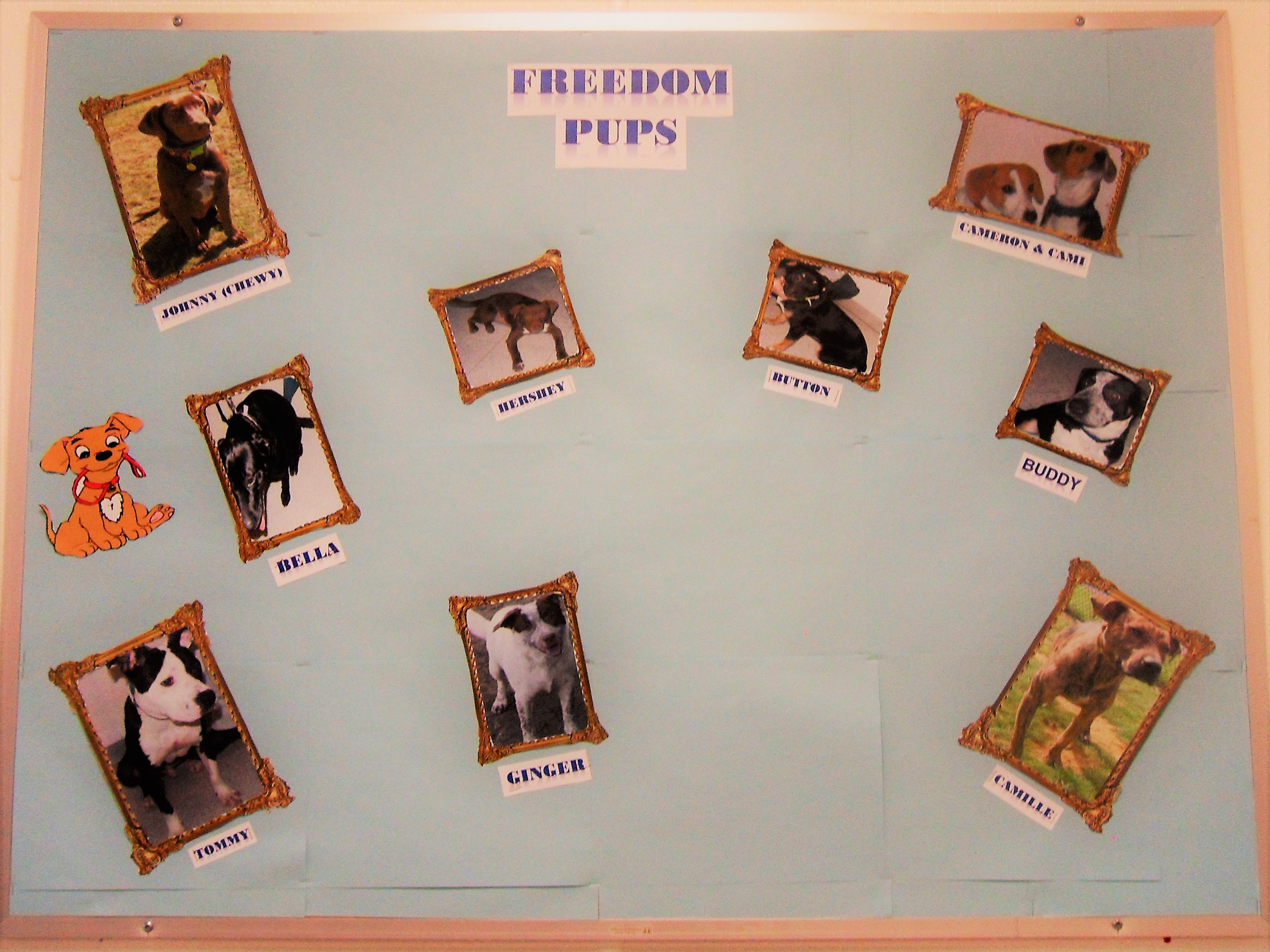 Project Good Dog Gives Hampden Prisoners And Pups A Second Chance Circuit Board Picture Frame Geek Armory Bulletin Of The Dogs Who Have Been Adopted As Part Photo By Sarah Heinonen