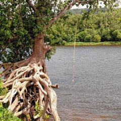 Down to Earth: A tree over the river