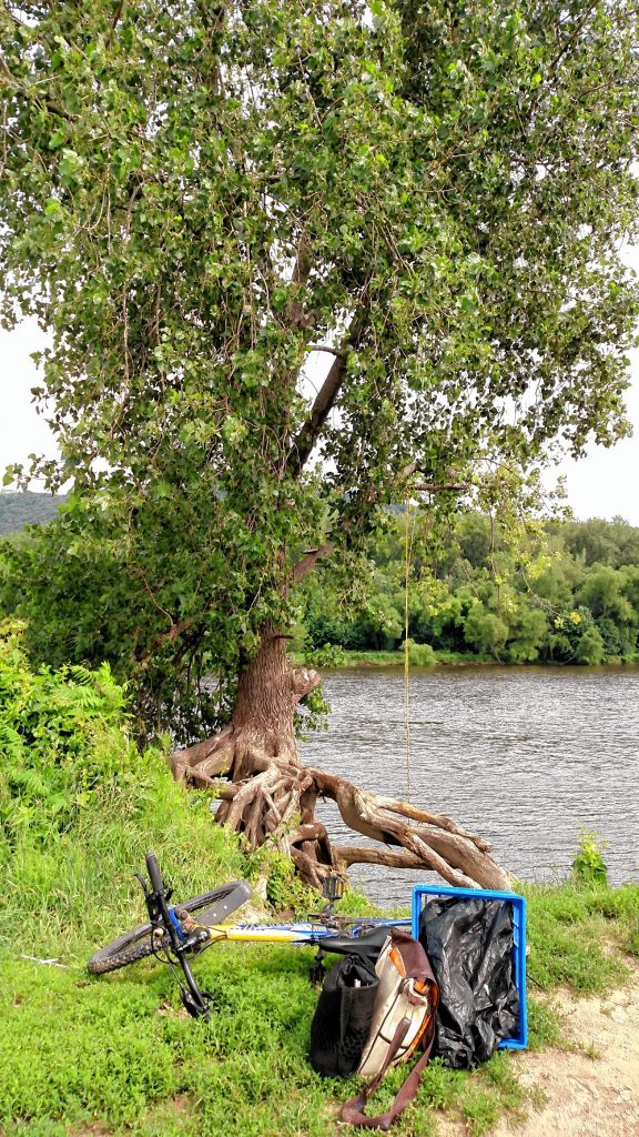 The author's bicycle next to a tree-root writing spot on the bank of Connecticut River, Northampton Meadows.