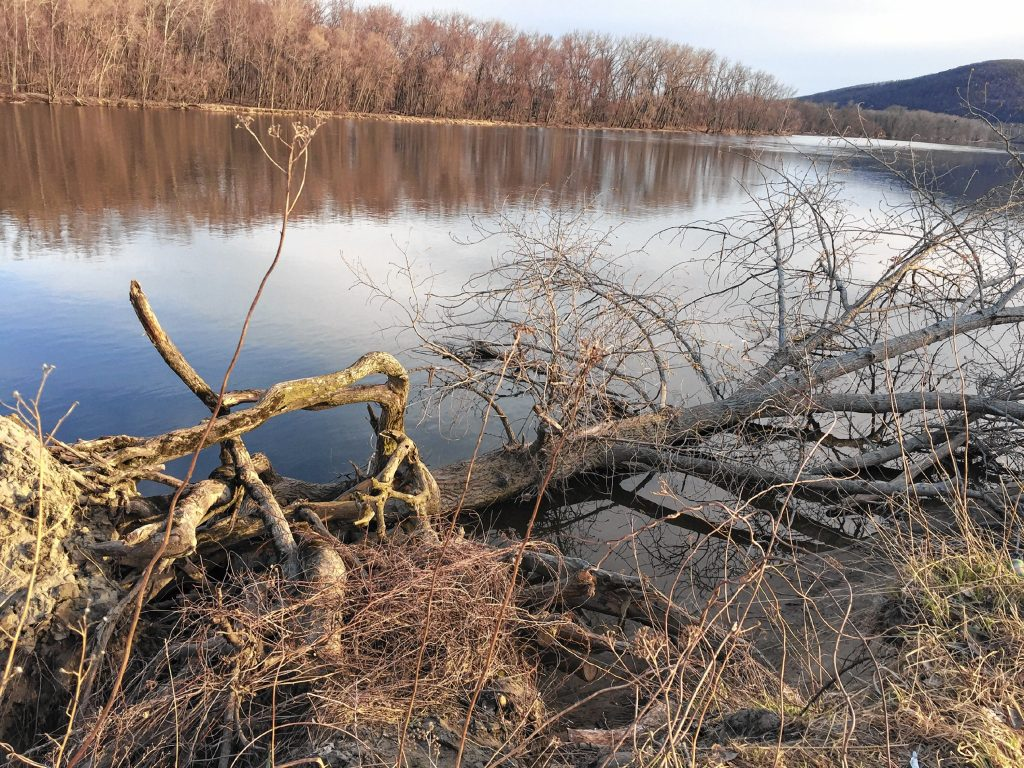 The rope swing tree, fallen after a hard winter.