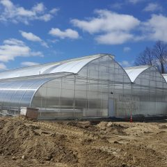 Large scale hydroponic greenhouse Wellspring Harvest to open in Indian Orchard, Springfield