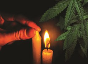 Can Legal Marijuana Snuff Out the Black Market?
