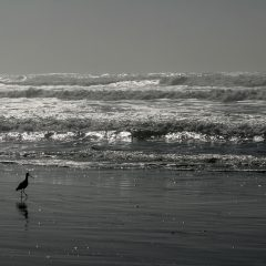 Down to Earth: The Ocean Alongside Us