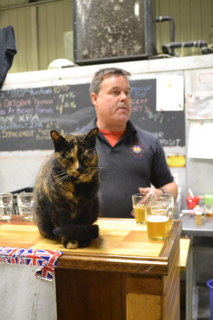 Chris Post, owner/brewer at Wandering Star Craft Brewery, works at his taproom in Pittsfield (with Fuggle the brewery cat) in November 2015.