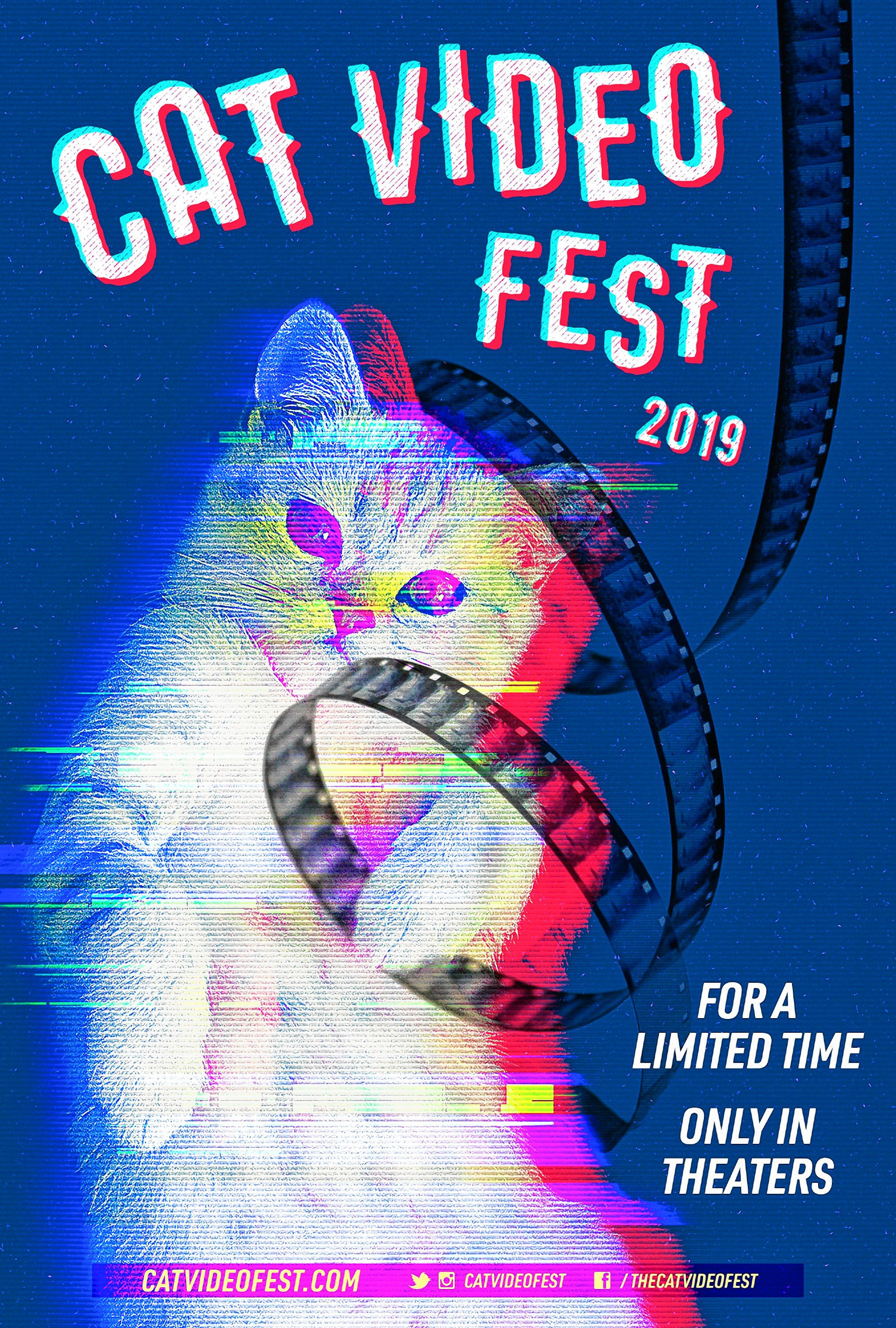 Cinemadope: CatVideoFest at Amherst Cinema