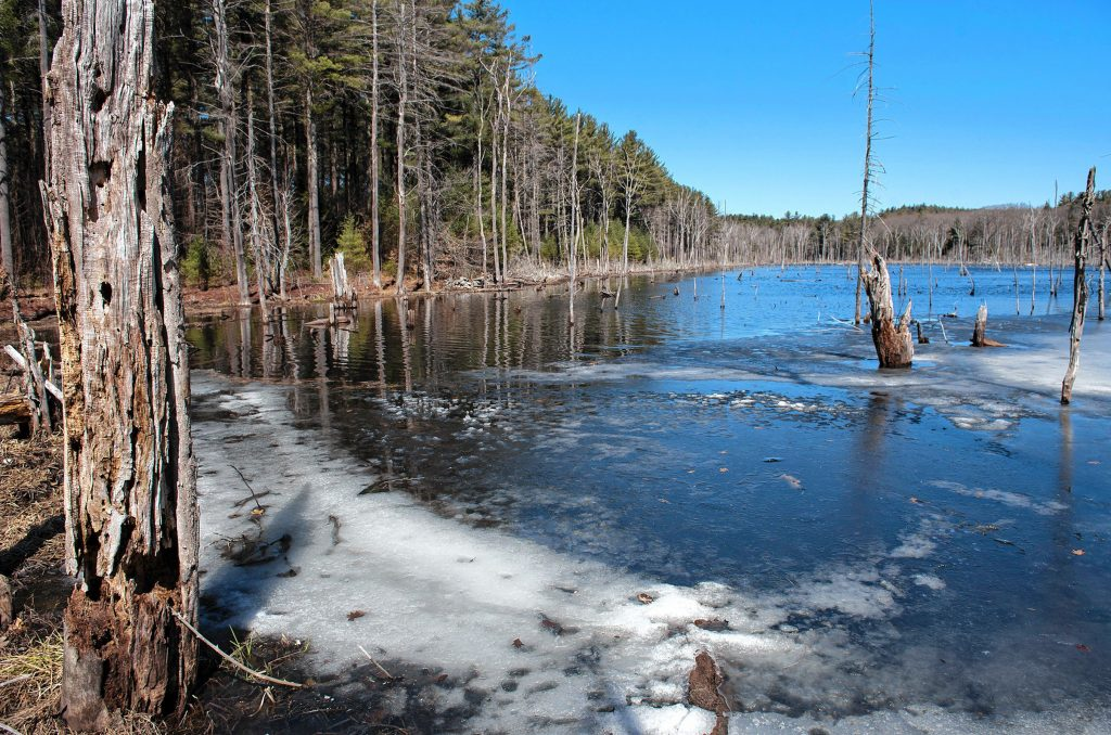 Bog on Farley Road in Wendell State Forest. Still has some ice on Thursday, April 4, 2019.