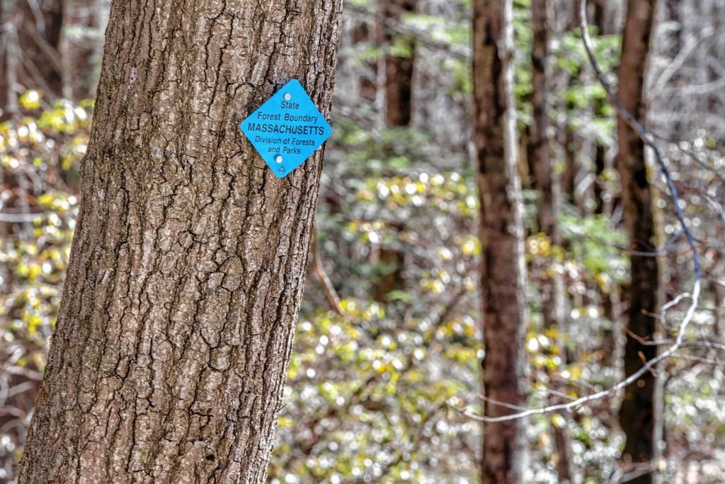 Tree marked with state forest boundary tag on Mountain Road in Wendell State Forest on Thursday, April 4, 2019.