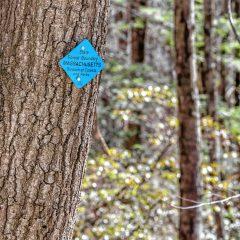 Back Talk: Support Forestry in Massachusetts