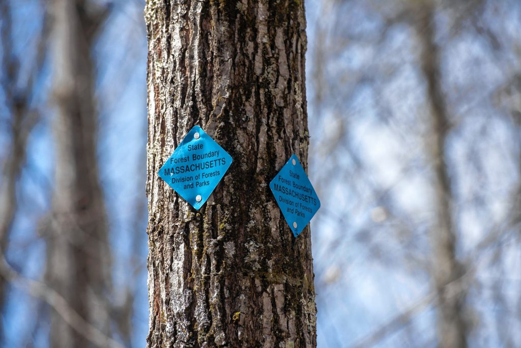 Tree marked with state forest boundary tag on Wickett Pond Road in Wendell State Forest on Thursday, April 4, 2019.