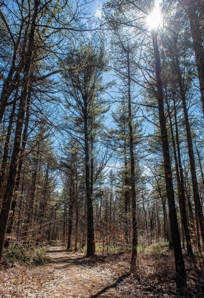 Hemingway Road in Wendell State Forest on Thursday, April 4, 2019.
