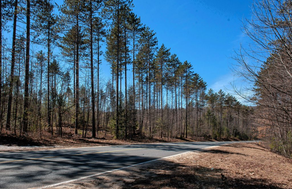 Scene in Wendell State Forest looking west along Montague  Road on Thursday, April 4, 2019.