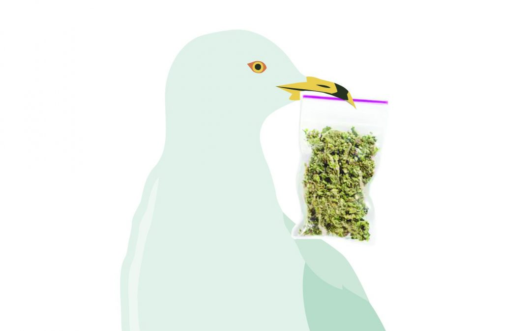 Bizarro Briefs: Swedish seagull swipes stash