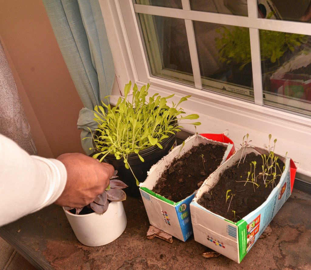 Natty tends to some flowering plants she is growing at the home of her sponsor, Friday, Mar. 6, 2020.