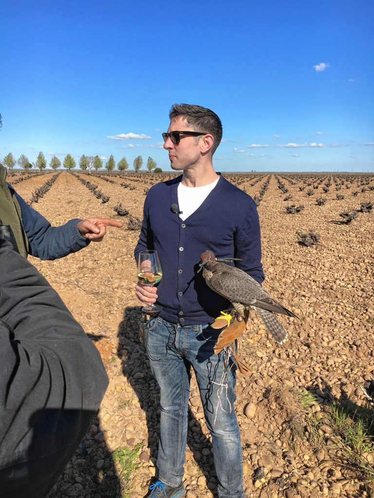Brahm Callahan in Spain with a falcon. Falcons are used in the vineyards as a pest management and deterrent system instead of using sprays or chemicals.