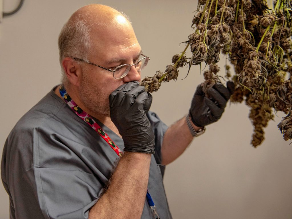 Krzanowski checks on some marijuana that is curing at the Canna Provisions grow facility in Sheffield.